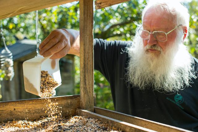 Ornithologe-Peter-Berthold-füllt-Vogelfutter-in-eine-Futterstelle